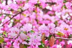 желтый цвет картины сердца цветков падения бабочки флористический поднимающее вверх поля глубины конца цветения яблока отмелое Стоковое Фото