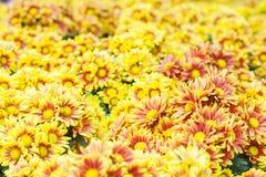 желтый цвет картины сердца цветков падения бабочки флористический Предпосылка от различных цветков Стоковая Фотография RF