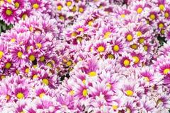 желтый цвет картины сердца цветков падения бабочки флористический Предпосылка от различных цветков Стоковая Фотография