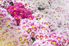 желтый цвет картины сердца цветков падения бабочки флористический Предпосылка от различных цветков Стоковое Изображение RF