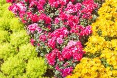 желтый цвет картины сердца цветков падения бабочки флористический Предпосылка от различных цветков Стоковое фото RF