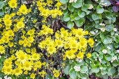 желтый цвет картины сердца цветков падения бабочки флористический Предпосылка от различных цветков Стоковые Фото