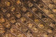 желтый цвет кожи крокодила красный Стоковая Фотография RF
