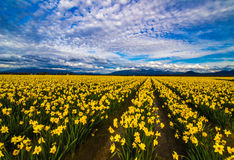 Желтый цвет к вечности Стоковое Изображение
