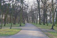 желтый цвет дороги парка осени Стоковая Фотография RF