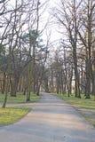 желтый цвет дороги парка осени Стоковая Фотография