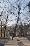 желтый цвет дороги парка осени Стоковые Фото