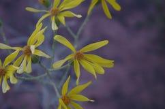 Желтый цвет одни Стоковые Фотографии RF