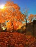 желтый цвет парка листва падения дня осени солнечный Стоковая Фотография