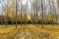 желтый цвет парка листва падения дня осени солнечный Стоковое Изображение RF
