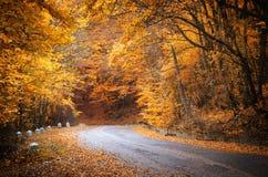 желтый цвет погоды валов солнца дороги осени зеленый Стоковые Изображения
