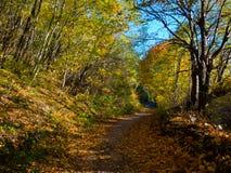желтый цвет погоды валов солнца дороги осени зеленый Стоковое Изображение