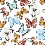 желтый цвет померанцовой картины цвета бабочки красный иллюстрация штока