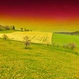 желтый цвет полей зеленый Стоковое Изображение RF