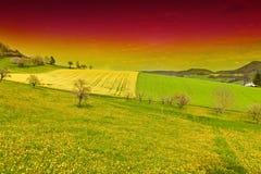 желтый цвет полей зеленый Стоковое Фото