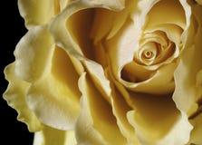 Желтый цвет поднял вверх близко стоковые изображения rf