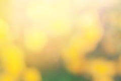 Желтый цвет предпосылки цветка света Солнця Blossoming Стоковая Фотография