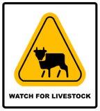 Желтый цвет предупредительного знака коровы Символ внимания опасности фермы Стоковое Изображение RF