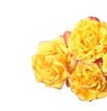 желтый цвет роз 3 Стоковое фото RF