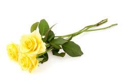 желтый цвет роз 3 Стоковые Изображения RF