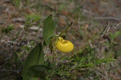 желтый цвет тапочки повелительницы Стоковые Изображения