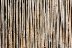 желтый цвет текстуры тростника предпосылки осени Стоковые Фото