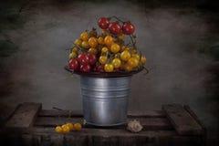 желтый цвет томатов красного цвета вишни Стоковые Фотографии RF