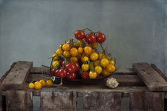 желтый цвет томатов красного цвета вишни Стоковое Изображение RF