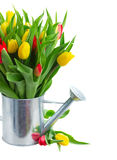 желтый цвет тюльпанов букета красный Стоковые Изображения