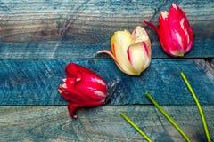 желтый цвет тюльпанов лиловый Стоковое Изображение RF