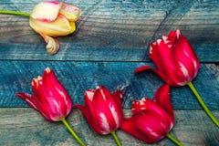 желтый цвет тюльпанов лиловый Стоковая Фотография