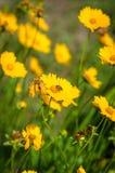 Желтый цвет цветет предпосылка Стоковое фото RF