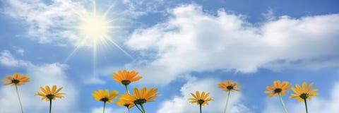 Желтый цвет цветет Rudbeckia против голубого неба с облаками, знамени Стоковые Фото