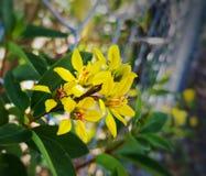 желтый цвет цветка малый Стоковые Изображения RF