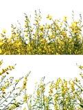 желтый цвет цветка одичалый Стоковые Фотографии RF