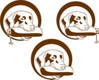 желтый цвет labrador звероловства собаки предпосылок белый Стоковые Изображения