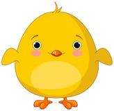 Желтый цыпленок Стоковые Изображения