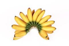 Желтый яичк-банан & x28; Mas& x29 Pisang; изолированный на белой предпосылке Стоковая Фотография