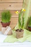 Желтый daffodil и свежие травы в баках и handmade сердца дня валентинок на светлой деревянной предпосылке Стоковая Фотография
