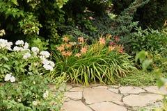 Желтый daylily против предпосылки пути сада сделанного san стоковые фото
