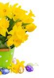 Желтый narcissus весны стоковые фотографии rf