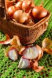 Желтый vegetable лук отрезанный в половине Стоковые Фотографии RF
