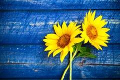 2 желтыми загородка покрашенная солнцецветами Стоковое Фото