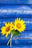 2 желтыми загородка покрашенная солнцецветами Стоковая Фотография