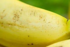Желтым детализированный бананом конец текстуры вверх Стоковое Фото