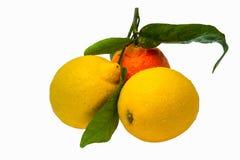 2 желтых лимона и один оранжевого tangerine с iso листьев зеленого цвета Стоковые Изображения