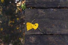 2 желтых листь осени на древесине Стоковое фото RF