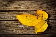 3 желтых листь осени Стоковое Изображение
