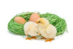 2 желтых маленьких цыплят Стоковые Фотографии RF