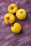 4 желтых органических яблока от полу-одичалого культивирования Стоковая Фотография RF